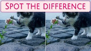 [ Brain games ] ( 3 ) Ep.002 Life_Animal_cats_01 | Spot the difference | photo puzzles | Healing