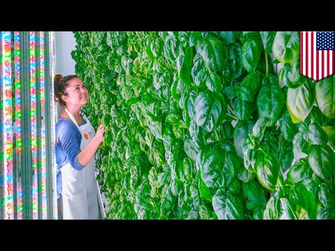 Vertical farming startup Plenty gets investment from SoftBank, Alphabet and Amazon - TomoNews