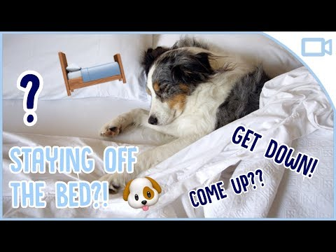 how-to-train-your-dog-to-stay-off-the-bed!