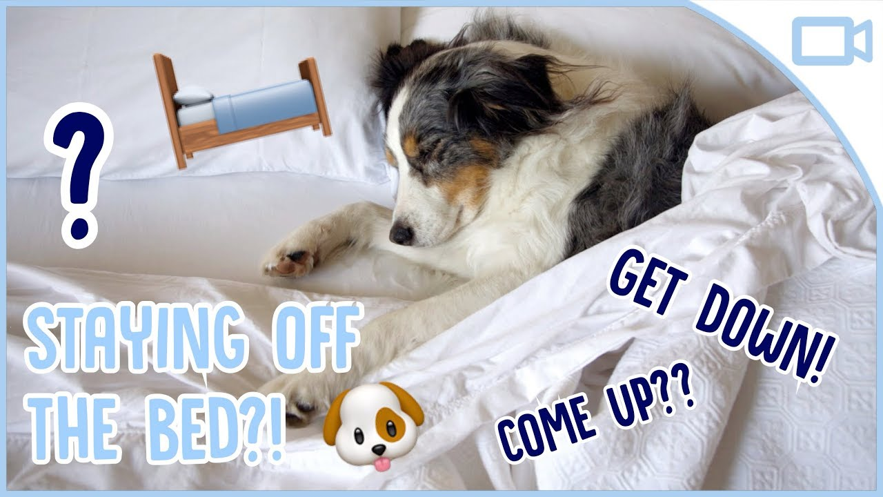 How To Train Your Dog To Stay Off The Bed Youtube