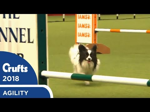 Agility - Kennel Club Novice Cup Final (Jumping) Part 2 | Crufts 2018