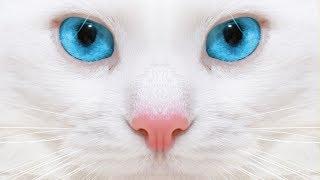 Каст только для любителей КОТЭ))) Пропала кошка. Куда обращаться?!
