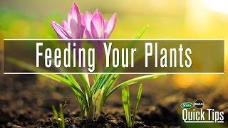 Garden Fertilizer | Scotts Miracle-Gro Canada