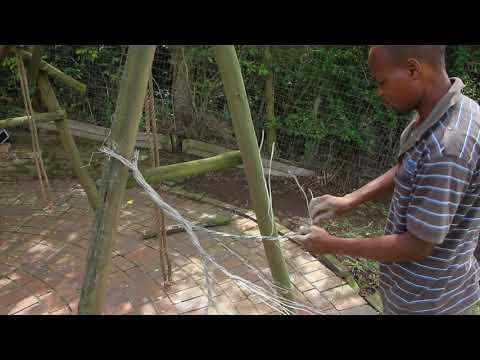 Making of a YBWG Acacia SnareTree Part 1