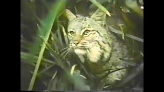 CBC April 24. 1983 Commercials