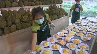 泰國榴槤吃到飽 10噸榴槤供不應求【大千世界】水果