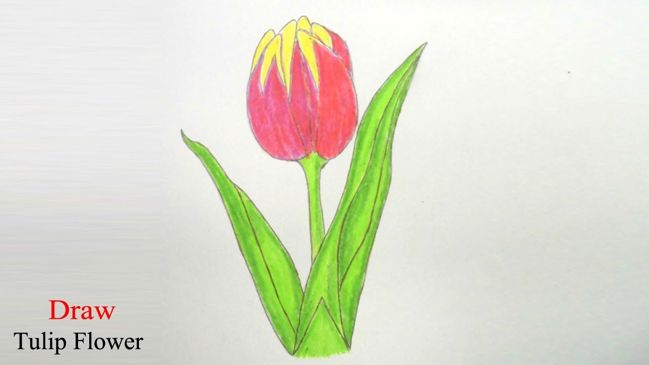 Uncategorized How To Draw A Tulip Easy how to draw tulip flower step by very easy youtube easy