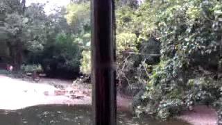 Harimau masuk air di zoo taiping