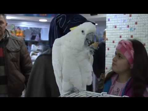 download 8 Bin Liralık Papağan