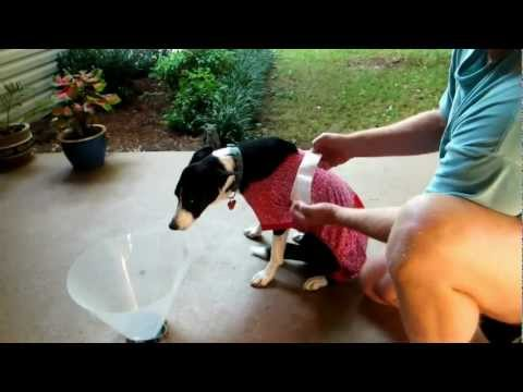how to put on dog cone