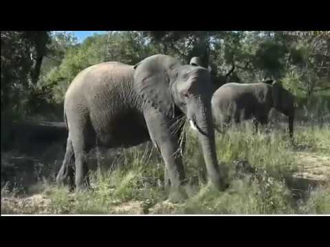 Wild Earth Africa sunset 11-march-2017 Last Drive whit Bryan &Wild dogs
