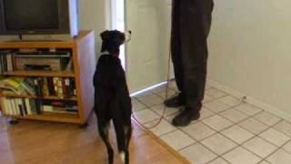 Training Self Control At Doorways With One Dog (preventing Door Dashing)