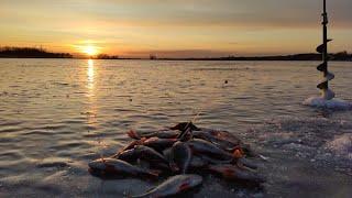 Закрытие сезона зимней рыбалки 2019-2020 ловлей окуня и плотвы на гвоздешарик