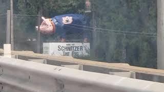Snitchzer pig!