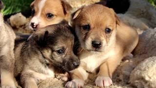 Мама и щенки 1 месяц - 4 девочки и 2 мальчика, Отдам щенков в добрые руки!