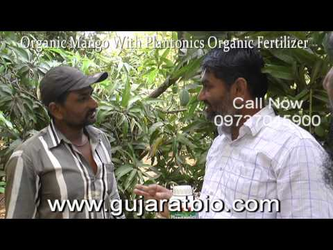 Organic Mango | Organic fertilizer for high Yield in Mango | Gujarat Bio |