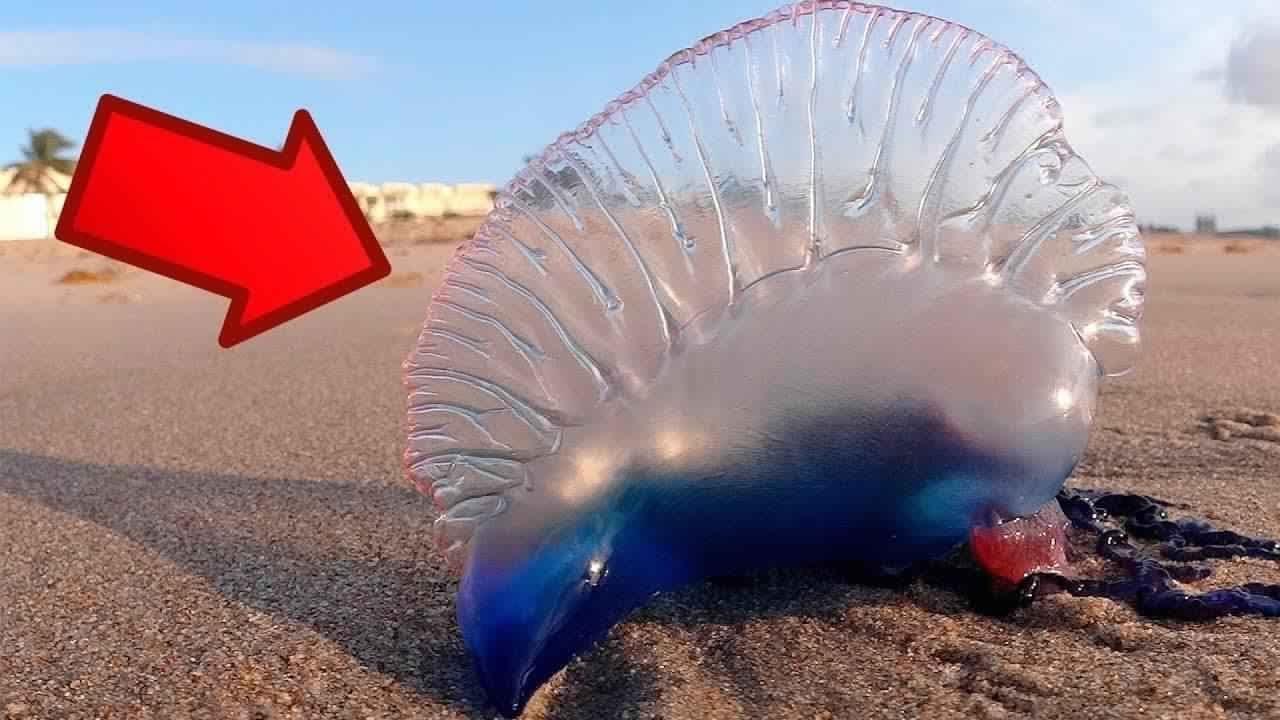 أخطر 10 حيوانات في العالم