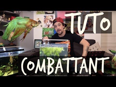 TUTO COMBATTANT ! - TOOPET