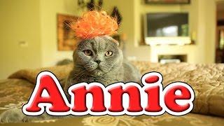 Annie - Tomorrow (Cute Kitten Version)