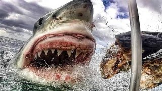 El tiburon blanco asesino