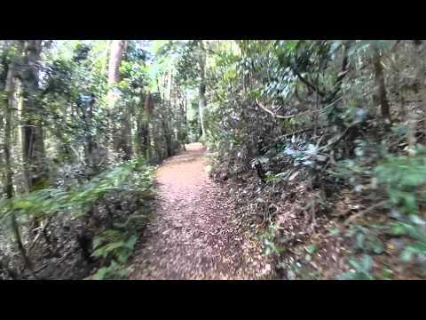 Virtual Rainforest Walk 27_09_12