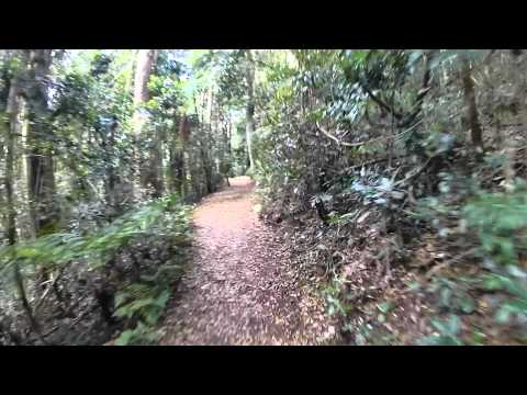 Virtual Rainforest Walk 27_09_12
