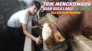 Trik Jitu ( KOMBORAN SAPI BASAH SEDERHANA ) Supaya Cepet Untung Jutaan Rupiah