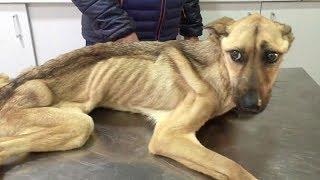 История спасения и невероятное преображение истощённого щенка, находившегосяся на грани смерти