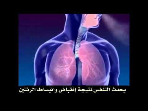 الجهاز التنفسي مترجم للغة العربية