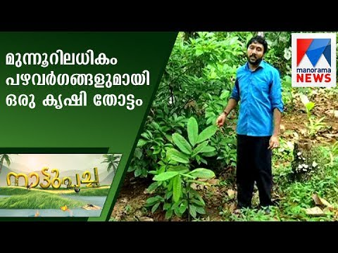 A farm with more than three hundred variety of fruits | Nattupacha   | Manorama News