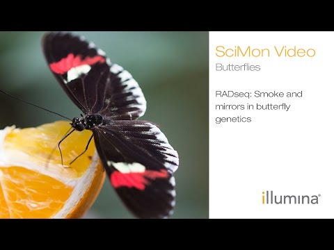 RADseq: Smoke and Mirrors in Butterfly Genetics