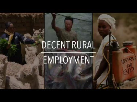 FAO Policy Series: Decent Rural Employment