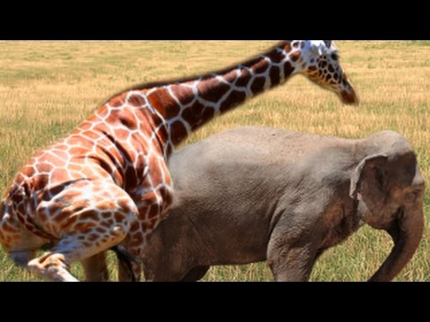 Animal Mating Breeding : Different Animals - YouTube