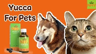 Yucca - Natural Supplement for Dogs and Cats. Helps with Pets with Pain and Appetite