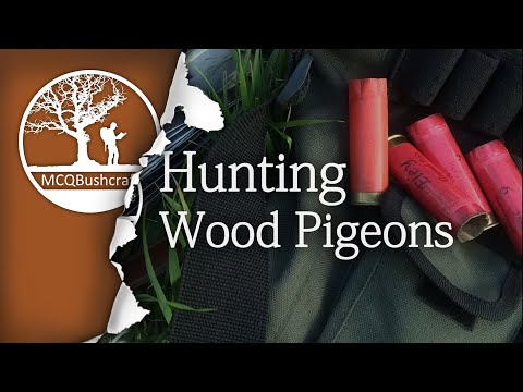 Hunting: Wood Pigeon & Grey Squirrel