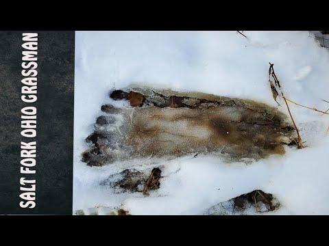 Bigfoot Prints in the snow   Salt Fork Ohio Grassman