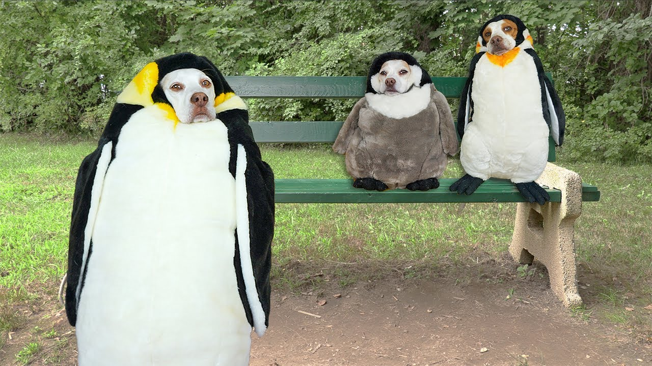 Lonely Penguin Dog Finds His People: A Short Film featuring Dogs Maymo, Penny & Potpie