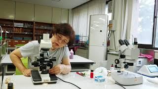 [11주차 실험] 양파세포와 공변세포 관찰하기
