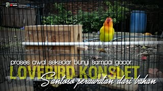 Download lagu PROSES TIDAK DISENDIRIKAN TERLALU LAMA LOVEBIRD KONSLET SANTOSO