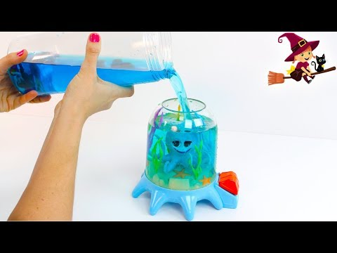 Adorable Pulpito que Vive en Aquarium sin Agua
