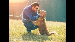 Как отучить собаку прыгать на хозяина?