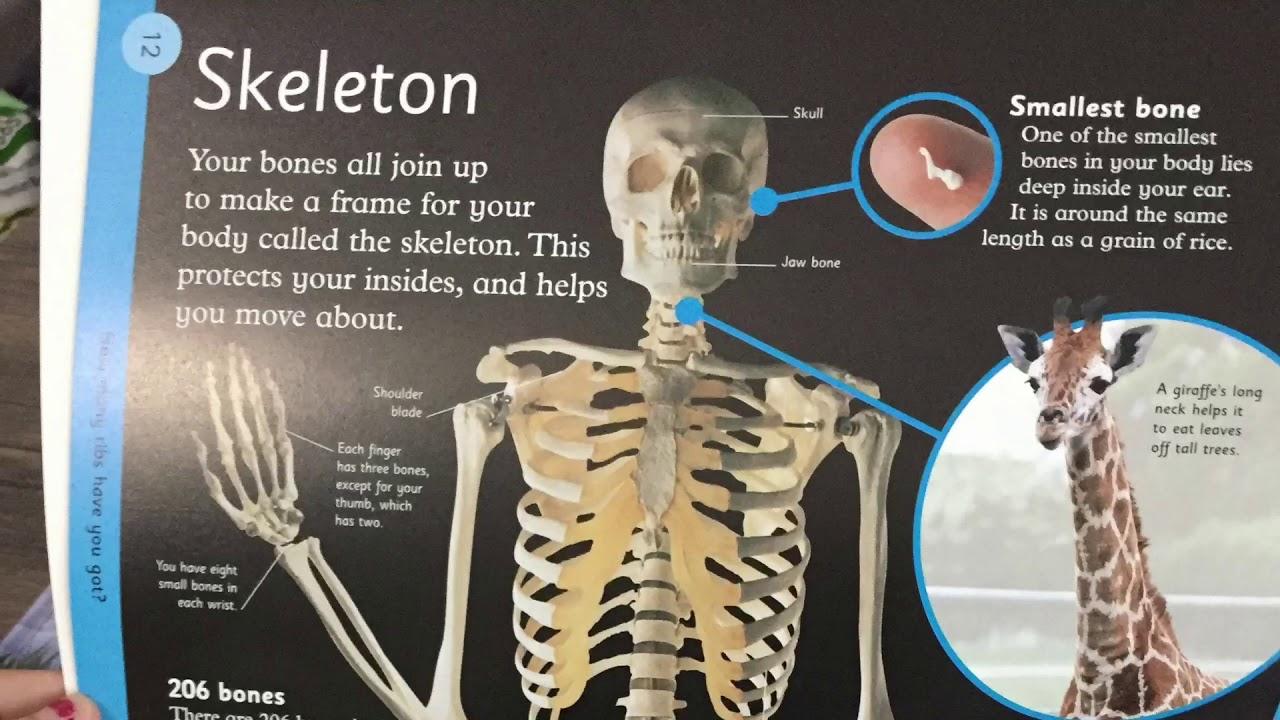 medium resolution of dk first human body encyclopedia
