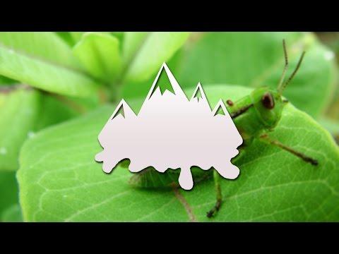 Awkward Silence Crickets - Sound Effect HD (Royalty Free)