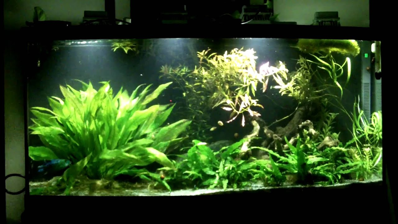 Aquarium lighting for plants - 72g Low Light Planted Tank With Led Part 1