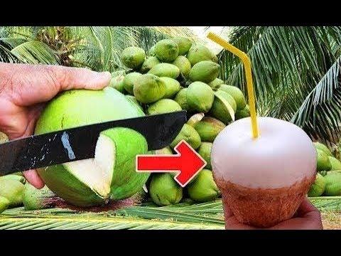 Kokosnuss öffnen leicht. How to peel coconut step of true professionals. วิธีการปอกเปลือกมะพร้าวอ่อน