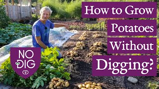 No Dig Potatoes from seed to harvest