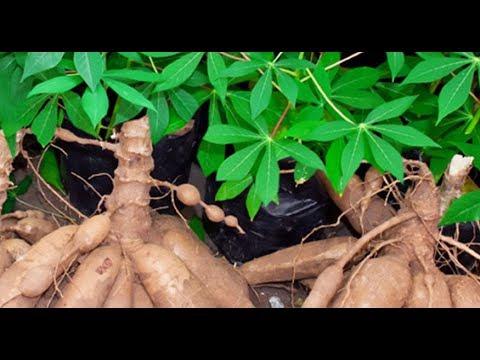 Cette plante puissante est certes peu connue mais elle peut traiter le cancer e soigne l'infertilité