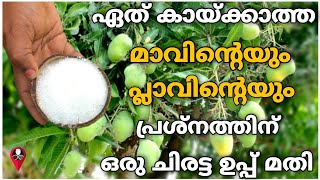 മാവും പ്ലാവും കായ്ക്കാൻ | mavu pookan malayalam tip | How to increase mango and jackfruit production