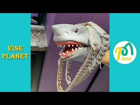 Best Shark Puppet Funny Instagram Videos 2019 - Vine Planet✔