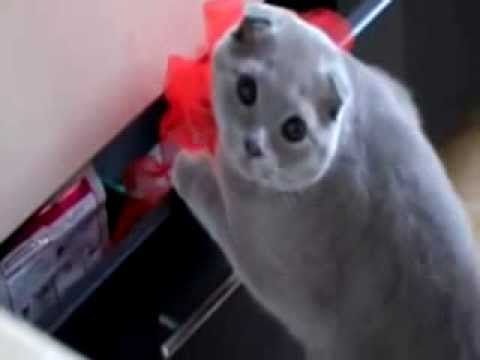 Cute Guilty Cats Compilation -  Funny Video